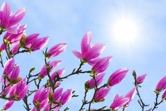 Magnolia y cielo Fotos de archivo libres de regalías