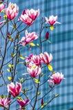 Magnolia y el WTC foto de archivo libre de regalías
