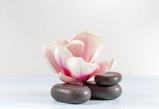 magnolia. Stock Images
