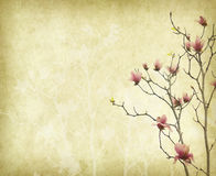 Magnoliabloem met Oud antiek uitstekend document Stock Fotografie