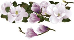 Magnoliabloemen Swag in Roze Stock Afbeeldingen
