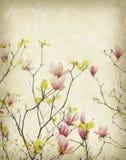 Magnoliablomma med gammalt antikt tappningpapper Arkivfoton