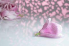 Magnoliablomma p? ett vitt br?de royaltyfria bilder