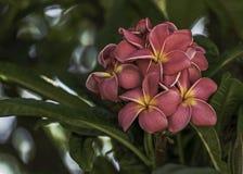 Magnoliaboom met bloemen stock foto's