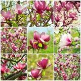 Magnoliacollage royalty-vrije stock foto
