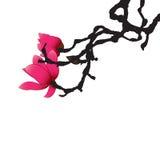 Magnolia royaltyfri illustrationer