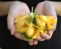 Gul magnolia Arkivfoton
