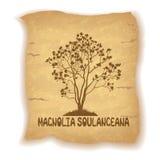 Magnoliainstallatie op Oud Document Stock Foto's