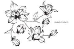 Magnolian blommar teckningen och skissar med linje-konst Arkivfoto