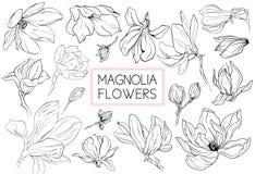 Magnolian blommar teckningen och skissar med linje-konst på vita bakgrunder stock illustrationer