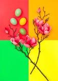 Magnolian för påskägg blommar den lekmanna- minsta lägenheten Royaltyfri Foto