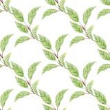 Magnolian lämnar på modell för utdragen vattenfärg för filialhand sömlös arkivfoto