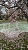 Magnolian parkerar arkivbild