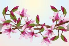 Magnolias Royalty Free Stock Photo