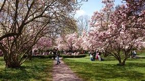 magnolias Royaltyfri Bild