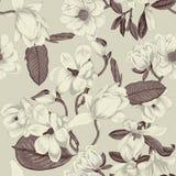 magnolias Blommor bakgrund blommar den seamless vektorn bostonian Vår blommas trees Grönsakmodell Trädgård vektor illustrationer