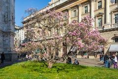 Magnoliaträdblomning nära Milan Duomo Cathedral, Italien arkivbild