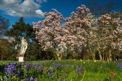 Magnoliaträd och äng i vår Arkivfoto