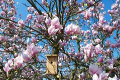 magnoliatree royaltyfri bild