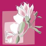Magnolie-Abbildung-Vektor Lizenzfreie Abbildung