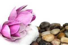 Magnolie-Blüte Stockfotos