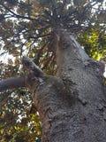 Magnolie ist jederzeit vom Jahr sehr schön stockbild