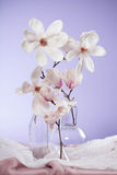 Magnolie - white flower. On fiolet Stock Image