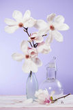 Magnolie - white flower. On fiolet Stock Images