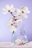 Magnolie - witte bloem Stock Afbeeldingen