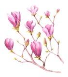 Magnoliebaum in der Blüte vektor abbildung