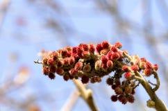 Magnolior i vinter Arkivfoton