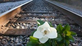 Magnoliowa linia kolejowa Fotografia Stock