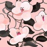 Magnoliowi kwiaty kwitną kwiecistego rocznika wektorowego bezszwowego wzór Zdjęcia Royalty Free