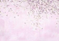 Magnoliowy drzewo Zieleń opuszcza, wieszający gałąź, fragrant kwiaty Zdjęcie Royalty Free
