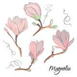 Magnoliowy kwiatu nakreślenie Powtórka botaniczny kwiecisty druk Nowożytni natura elementy ilustracji