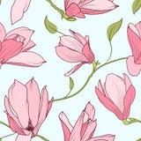 Magnoliowy Sakura kwitnienie kwitnie bezszwowego wzór Fotografia Royalty Free