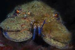 Magnosa плавает в море Стоковое Изображение RF