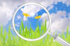 Magnyfying exponeringsglas, gräs och gul blomma Arkivbild