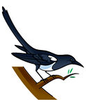 Magpie. Bird sitting on the tree Stock Images