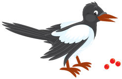 Magpie. Vector clip-art of a magpie having a black-and-white plumage and long tail Royalty Free Stock Photography