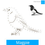 Magpie bird learn to draw vector Stock Photos