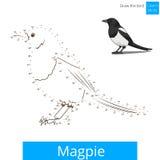 Magpie bird learn to draw vector Stock Photos