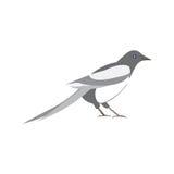 Magpie bird. Vector illustration of a black and white bird Stock Photos