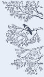 Magpie on the branches of ash tree. Vector sketch Stock Images