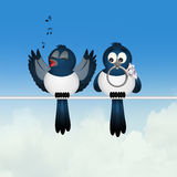 Magpie couple on wire. Illustration of magpie couple on wire Stock Photos