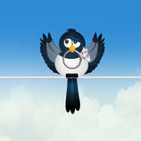 Magpie with jewel. Cute illustration of magpie with jewel Royalty Free Stock Images