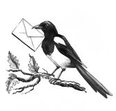 Magpie with a letter. Magpie bird with a letter in the beak sitting on the oak tree branch Stock Photo