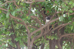 Magpie perched on a branch. Find the food Stock Images