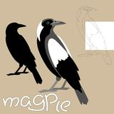 Magpie vector illustration style flat black silhouette line. Drawing Stock Image