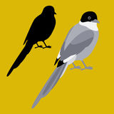Magpie vector illustration style Flat  set black Royalty Free Stock Images